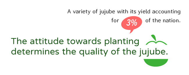 The attitude towards planting determines the quality of the jujube.